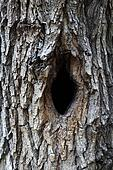 Bird house, bark of tree with a hollow