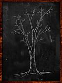 Branch Tree Sketch on Blackboard
