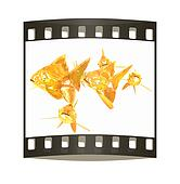 Gold fishes. The film strip