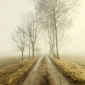 The road to the fog