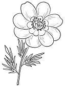 Flower, adonis, contour