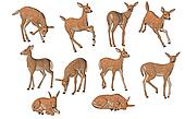 Young fawns in different poses