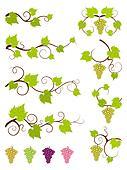 Grape vines design elements set.