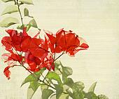 Red Bougainvillea Branch on Bamboo Background