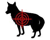 Coyote crosslines
