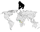 World Gorilla range