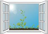Vector illustration green sprouts in an open window
