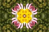 Abstract ornament with camomile