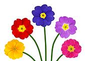 Colorful Primroses on Green Stick Isolated