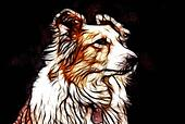 Artistic Impression Border Collie