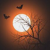 Bats at night time