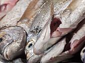 Fresh cleaned fish