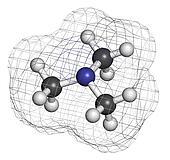 Trimethylamine volatile tertiary amine molecule. Important compo