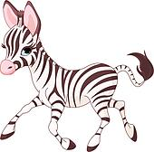 Cute  running   baby Zebra