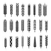Wheat ear icon set, graphic design elements, black isolated on white background,  illustration.