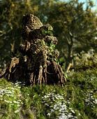 The Druids Stump