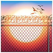 fence with barbed wire and birds