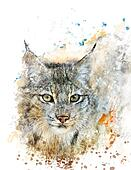 Watercolor Image Of Lynx