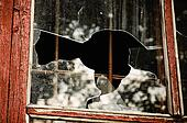 Pieces of a broken window
