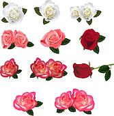 Group of a beauty roses.