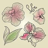 Set of floral orchid design element