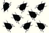 Black beetles on white background