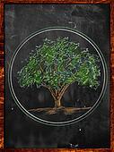 Tree Sketch color leaves