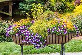 Pansies in Planter Basket