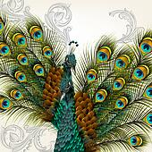 Cute background with vector detailed pair of  peacocks on white