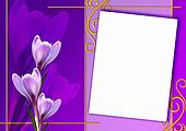 Card of Crocus flowers
