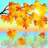 Autumn tree maple on background of sunset