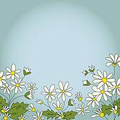Card with the image of daisies camomile