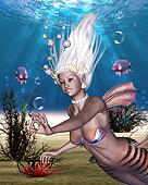 Mermaid - The most beautiful of all