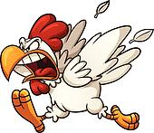 Angry chicken