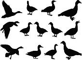 big collection of duck - vector