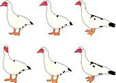 duck collection - vector