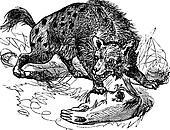 Spotted Hyena or Crocuta crocuta vintage engraving