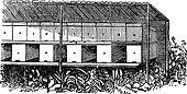 Apiary or Bee yard vintage engraving