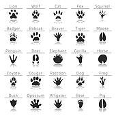 Animal track prints set