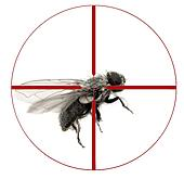 Kill House Fly with Crosshairs