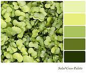Salad cress palette