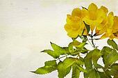Watercolor Campsis radicans flowers