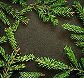 Fir-tree twigs frame