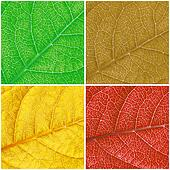 This is color leafs background. It is theme of seasons.
