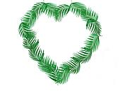Green leaf of palm tree shape heart on white background
