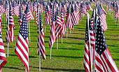Sea of American flags on National Cemetery