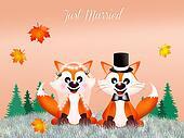 wedding of red fox
