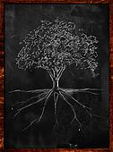 Tree Sketch root on blackboard