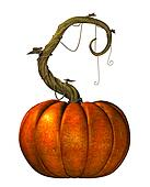 Great Pumpkin on vine
