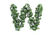 Stone letter W covered with ivy, isolated